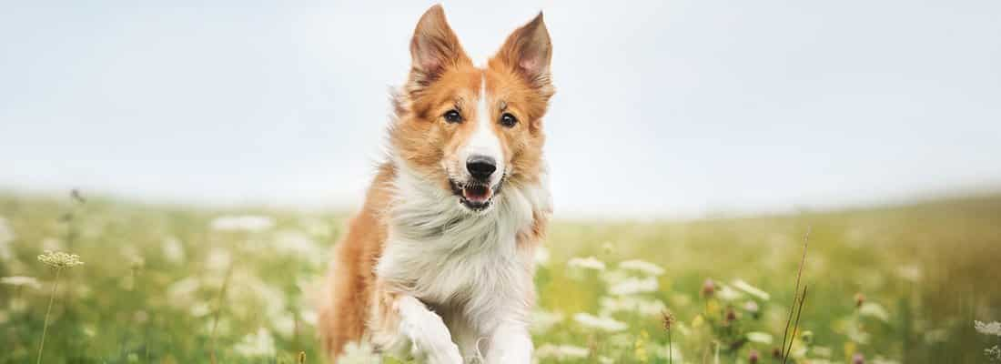 animal assisted therapy for addiction recovery in Florida