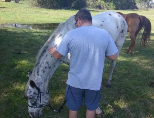 Saint Johns Recovery Place is proud to announce that we now offer Equine Therapy.